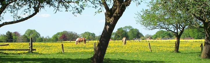 Frühlingswiese mit Pferden im Naturpark Wildeshauser Geest